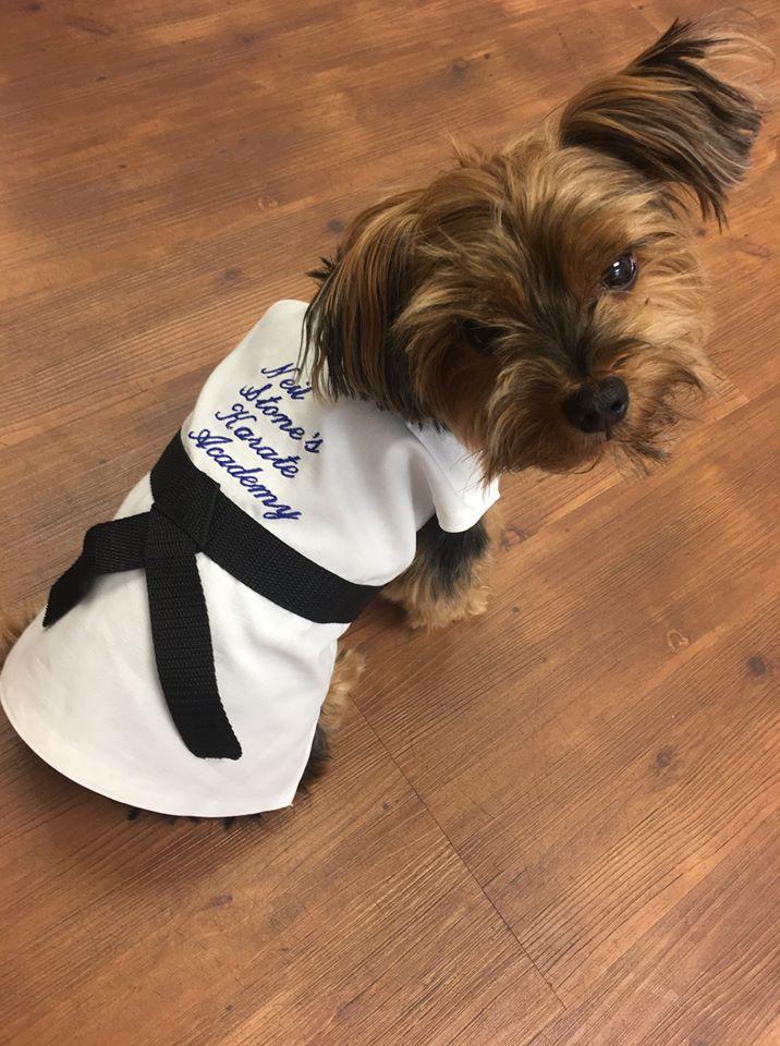 Dog wearing Neil Stone Karate Gi